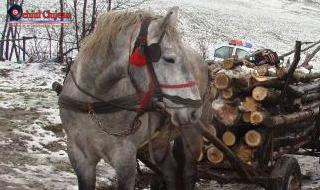 Material lemnos confiscat de poliţişti pe raza comunei Tureni