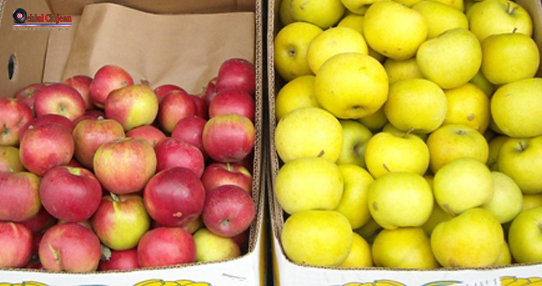 100 de kilograme de mere confiscate de politistii clujeni