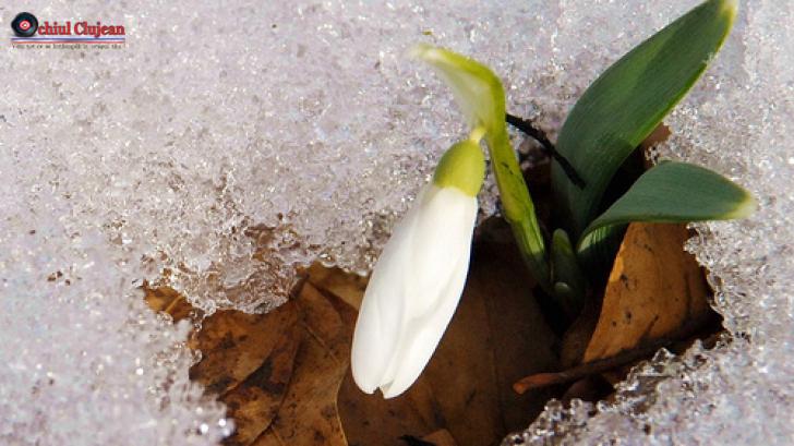 METEO: Prognoza în intervalul 20 ianuarie – 02 februarie în Transilvania