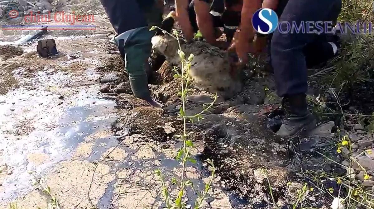 IMAGINI SOCANTE! Turma de oi salvata de Pompierii dejeni dintr-o groapa plina cu bitum FOTO-VIDEO