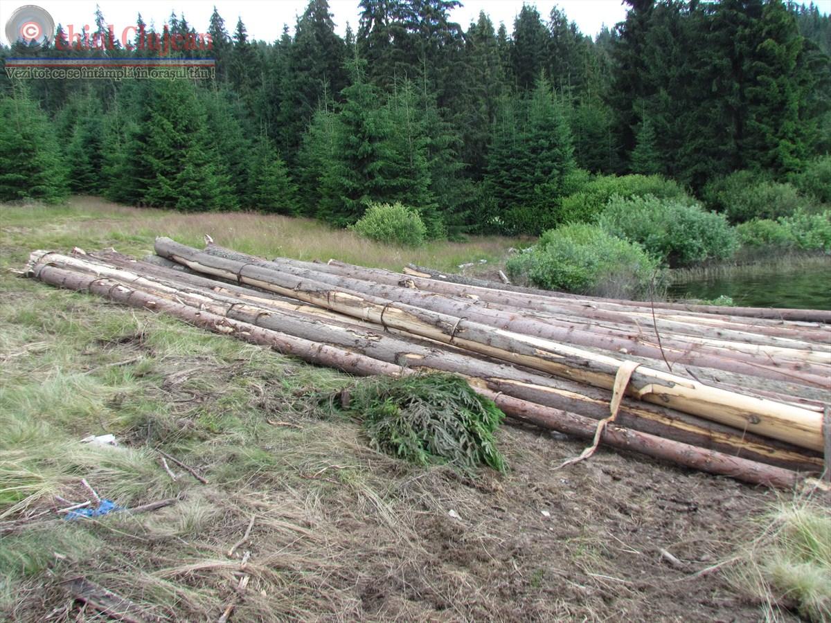 Material lemnos in valoare de peste 5000 lei confiscat de politistii clujeni FOTO