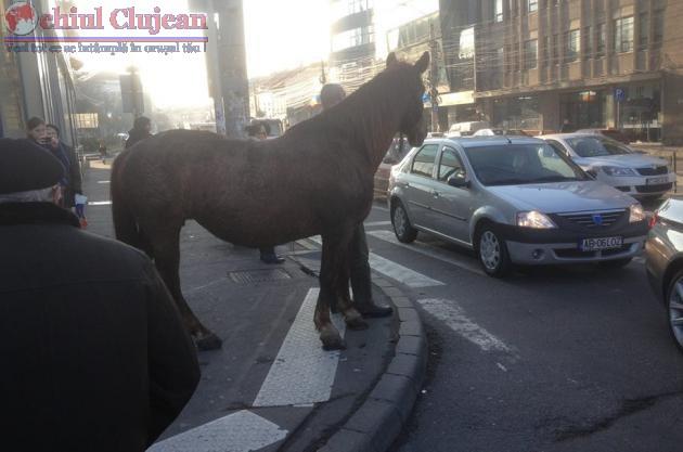Un cal asteapta linistit la semafor FOTO