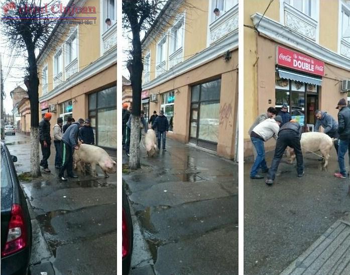 Cum se taie porcul in centrul orasului FOTO