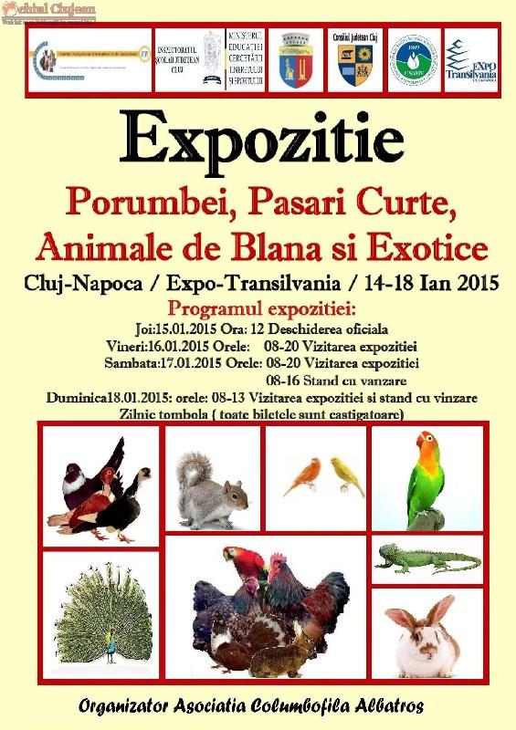 Expozitie de porumbei, pasari de curte, pasari exotice, hamsteri, pesti exotici, pauni, fazani, gaste, rate, prepelite, iepurasi si veverite va avea loc in perioada 14-18 ianuarie  la Cluj