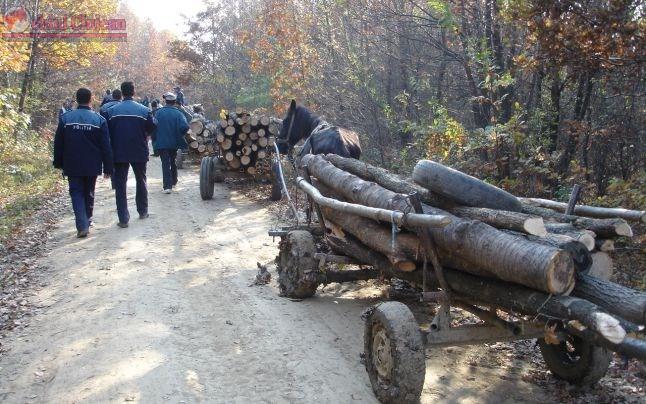 Ampla actiune a politistilor clujeni pentru protejarea fondului forestier