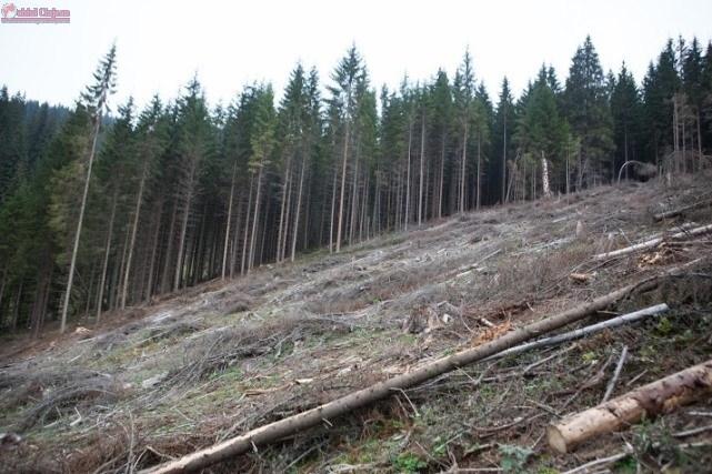 Incepe actiunea de plantare in Padurea Clujenilor