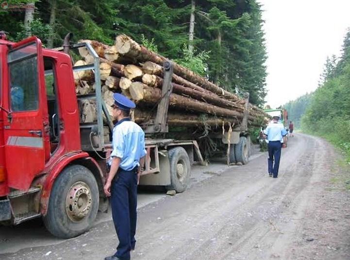 Circa 258 de metri cubi de material lemnos, confiscați de polițiștii clujeni la Beliș