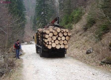 Material lemnos, confiscat de polițiștii clujeni la Beliș