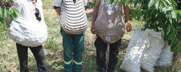 Clujeni prinși la furat de fructe! 6 persoane au fost identificate de jandarmii clujeni