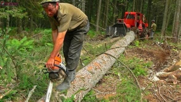 Hoț de lemne din Măguri Răcătău, prins de politiștii clujeni