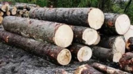 Acțiuni ale polițiștilor clujeni în domeniul silvic