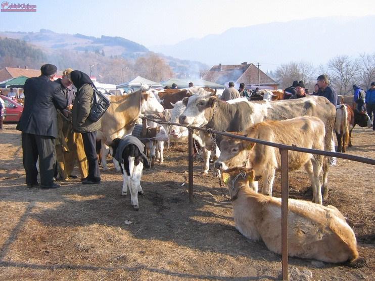 Razie la târgul de animale din Dej. Polițiștii au aplicat amenzi de 4.000 de lei