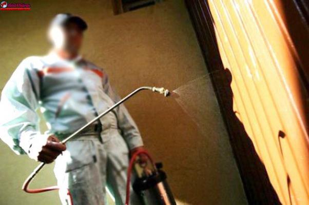 Angajați falși de la deratizare, identificați de polițiști la Cluj