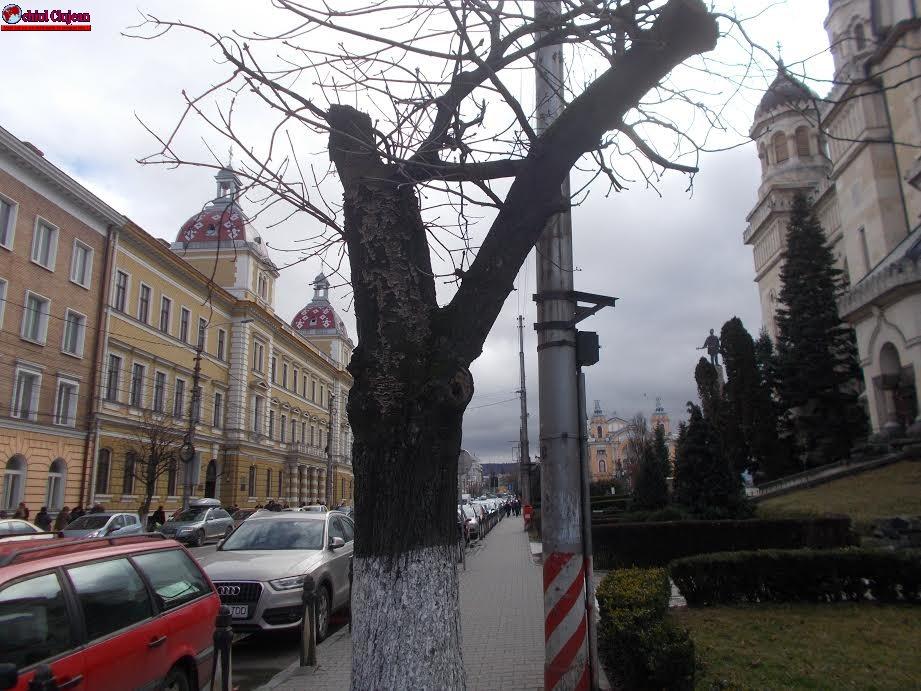 Acțiuni privind întreținerea spațiilor verzi din muncipiul Cluj-Napoca FOTO