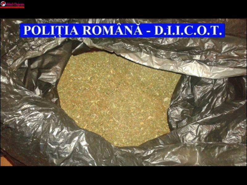 Cannabis și semințe de cannabis, ridicate de polițiști la Cluj FOTO