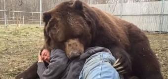 Un barbat a găsit un pui de urs ramas orfan. 22 de ani mai tarziu imaginile cu ei fac senzatie pe internet VIDEO