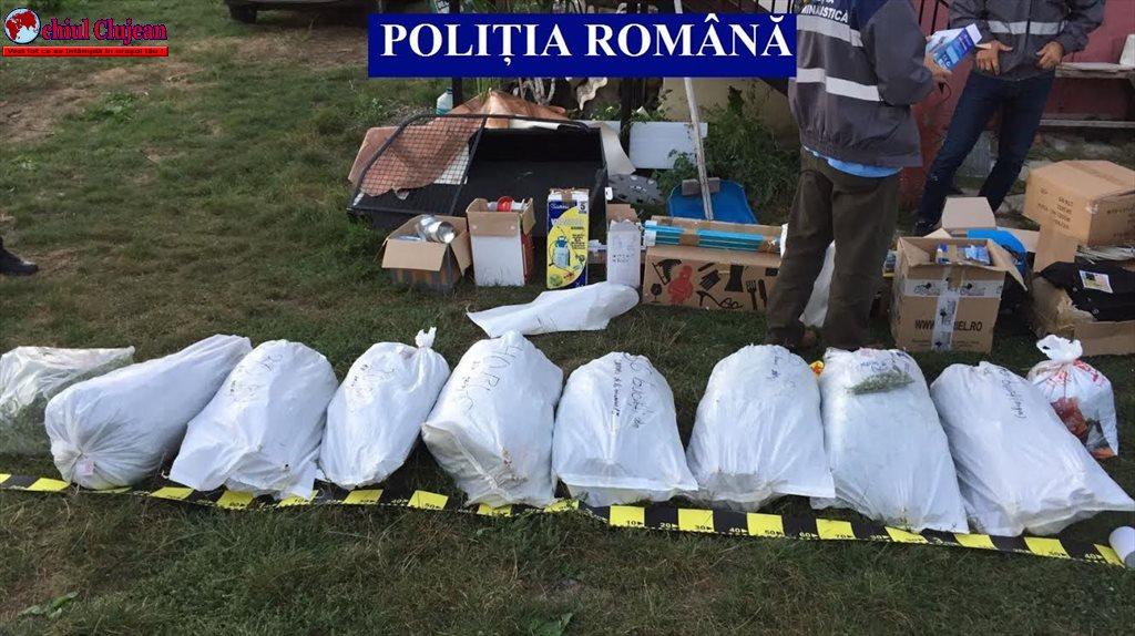 Cultură de cannabis, descoperită de polițiști în județul Cluj VIDEO