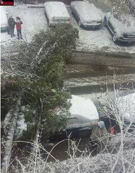 Vreme rea la Cluj-Napoca! Mai mulți copaci au fost doborâți  la pământ UPDATE FOTO