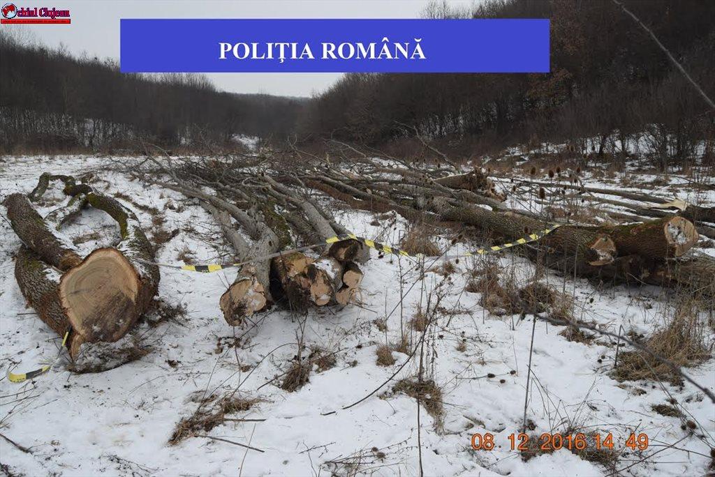 Cluj: Tăiere ilegală și furt de arbori FOTO