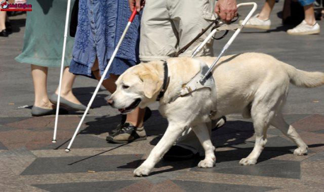 Cluj-Napoca: O tânără nevăzătoare însoțită de câinele ei însoțitor a fost dată afară dintr-un magazin Panemar