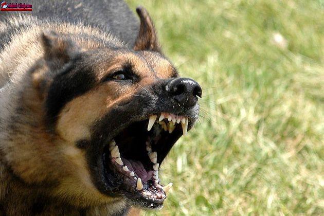 Un copil de 8 ani se zbate între viață și moarte, după ce  a fost sfâșiat de patru câini la  Campia Turzii