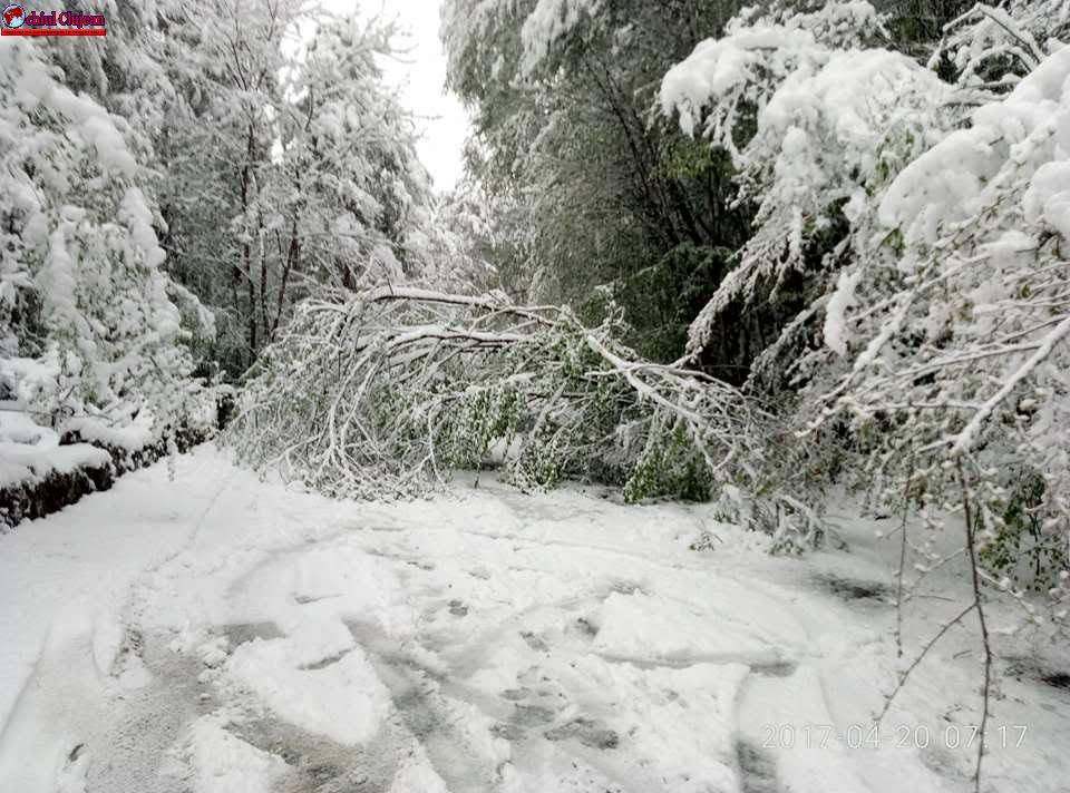CLUJ: Intervenții pe drumurile județene afectate de căderile de zăpadă şi de vânturile puternice FOTO