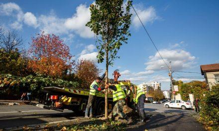 Acțiune de plantare a arborilor în Cluj-Napoca FOTO
