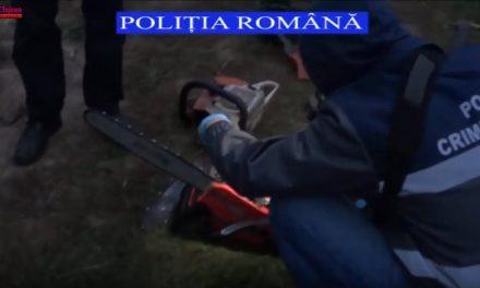 Cluj : Percheziții la persoane bănuite de tăiere ilegală și furt de arbori. 6 persoane reținute VIDEO
