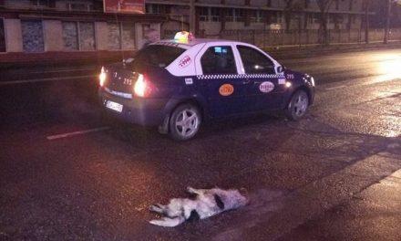 ȘOCANT! Câine călcat intenționat cu mașina de un taximetrist FOTO