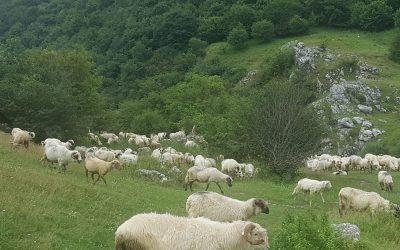 Cluj: O nouă acțiune de protejare a Rezervației Naturale Cheile Turzii