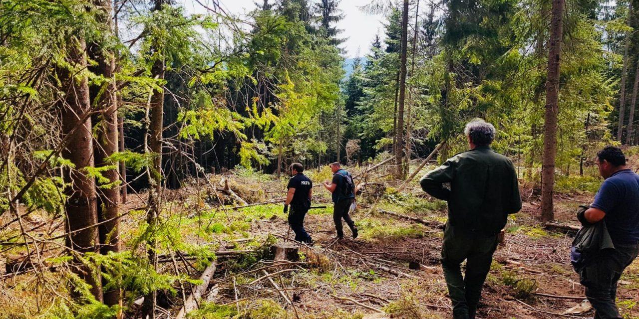Furt de lemne la Beliș! Polițiștii au descoperit sute de cioate nemarcate FOTO