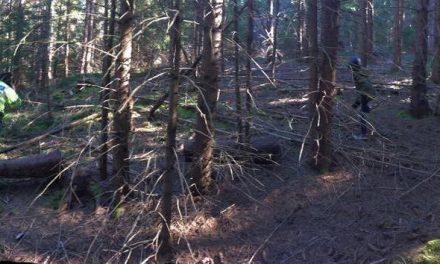 Cluj: Copil de 6  ani rătăcit în pădure. Polițiștii l-au găsit după două ore de căutări FOTO