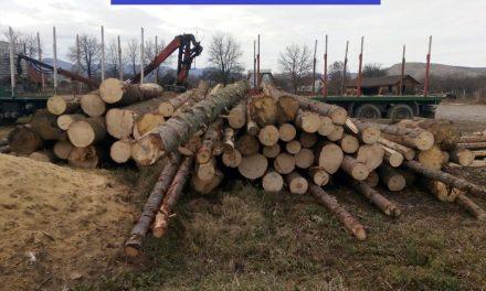Cluj: Bărbaţi, reținuți pentru furt de arbori, fals intelectual și uz de fals FOTO