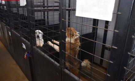 Emil Boc în vizită la Centrul de gestionare a câinilor fără stăpân din Cluj-Napoca VIDEO