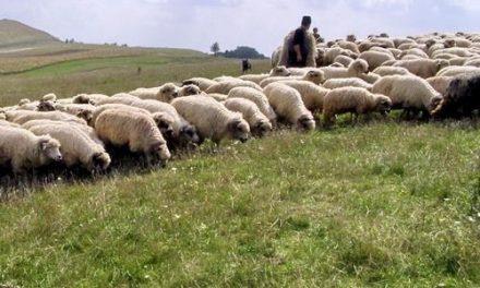 Modificări la ajutorul de minimis pentru comercializarea lânii