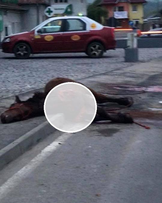 Pericol pe șosea! Cal spulberat de o mașină în Florești FOTO