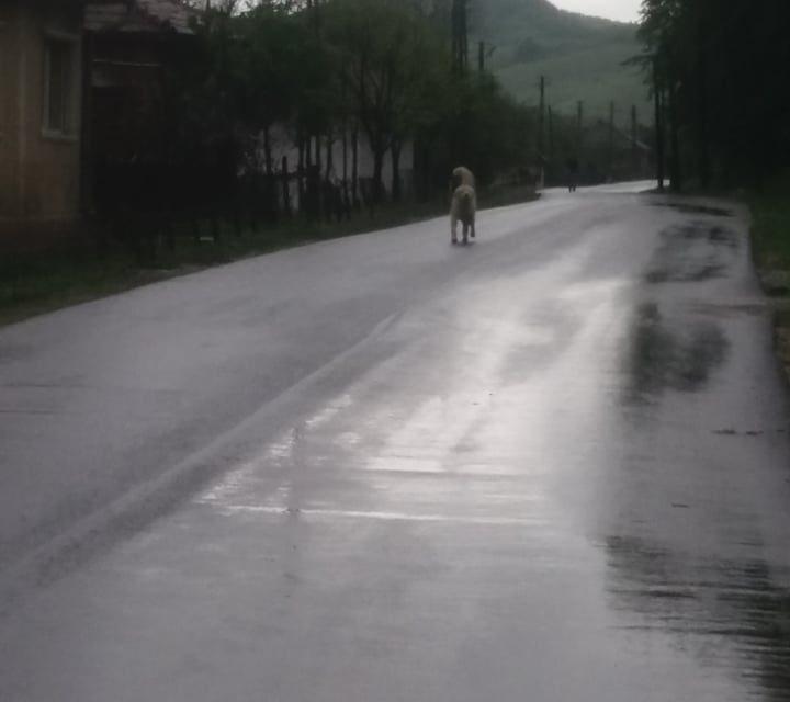 Șoferii fac slalom printre capre, iar localnicii se feresc de câini, într-o comună din județul Sălaj  FOTO