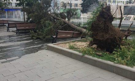 Furtună la Cluj: Copaci smulși din pământ, mașini avariate și acoperișuri desprinse FOTO