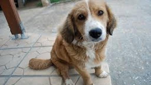 CLUJ: Vietnamezi acuzați că au furat și au MÂNCAT un câine