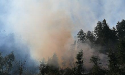 Cluj : Incendiu de pădure FOTO VIDEO