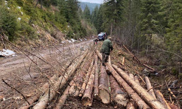 Cluj: Acțiuni ale polițiștilor pentru protejarea fondului silvic FOTO