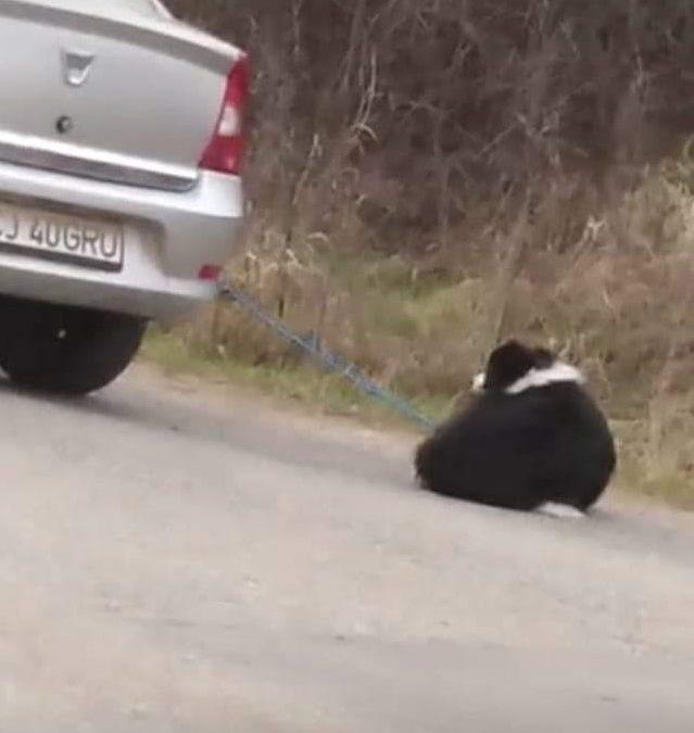 Cluj: Câine legat de un autoturism. Polițiștii s-au sesizat din oficiu